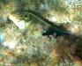 Ilhas Selvagens Unterwasser