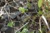 Petit Terre Leguane