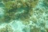 Tobago Keys Unterwasser