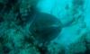 Unterwasser vor Culebra