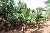 Zoo und botanischer Garten